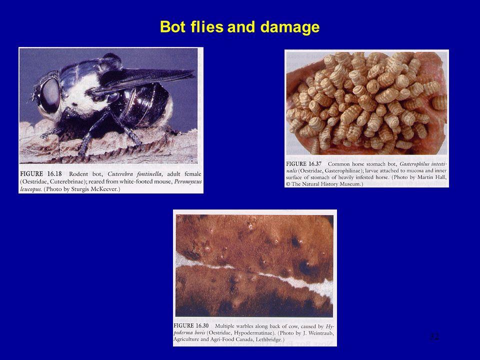32 Bot flies and damage