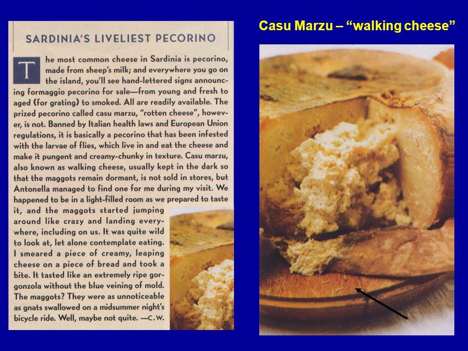 6 Casu Marzu – walking cheese