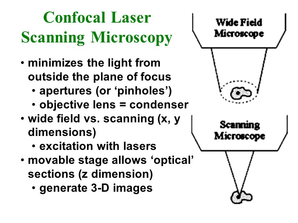 Confocal Laser Scanning Microscopy minimizes the light from outside the plane of focus apertures (or pinholes) objective lens = condenser wide field v