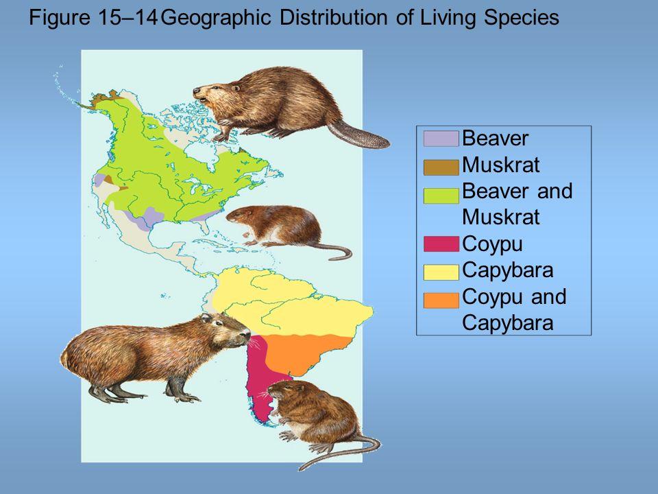 Figure 15–14Geographic Distribution of Living Species Beaver Muskrat Beaver and Muskrat Coypu Capybara Coypu and Capybara