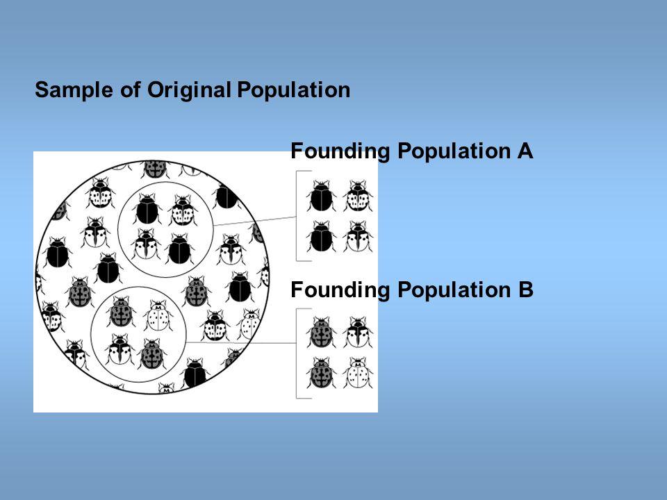 Founding Population A Sample of Original Population Founding Population B
