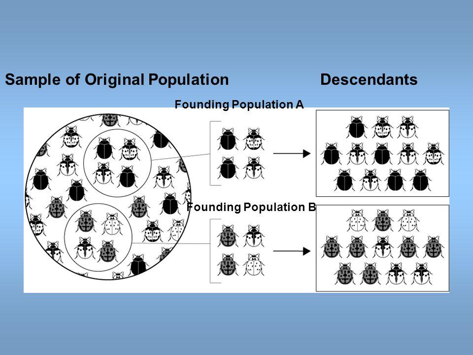 Founding Population A Sample of Original PopulationDescendants