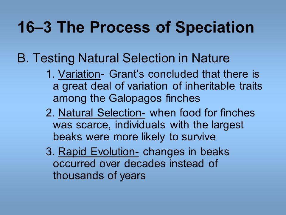 16–3 The Process of Speciation B. Testing Natural Selection in Nature 1. Variation- Grants concluded that there is a great deal of variation of inheri