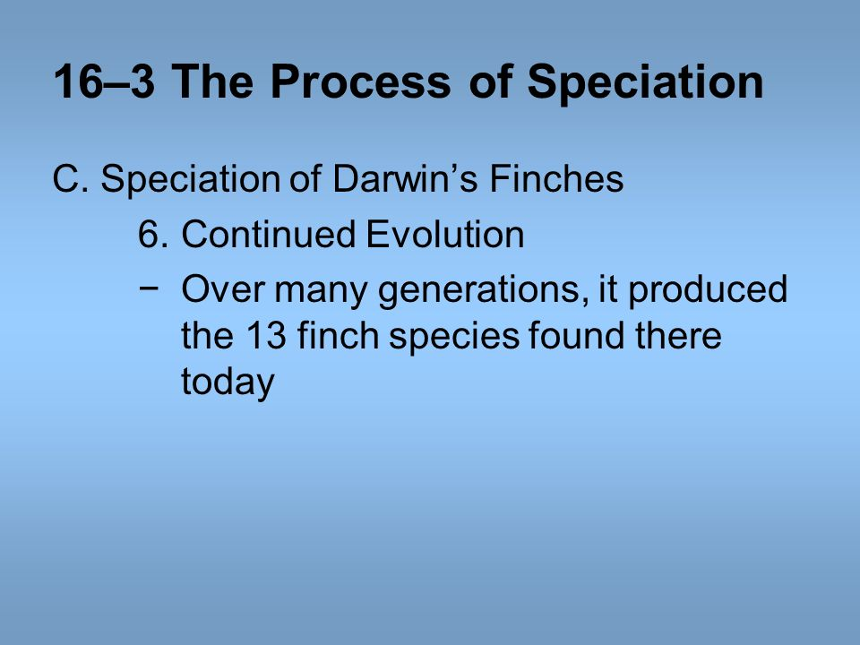 16–3 The Process of Speciation C. Speciation of Darwins Finches 6.Continued Evolution Over many generations, it produced the 13 finch species found th