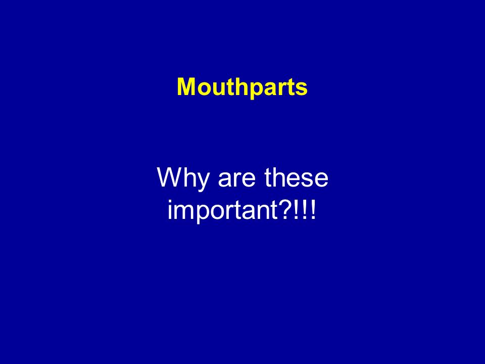 Mouthparts Why are these important?!!!