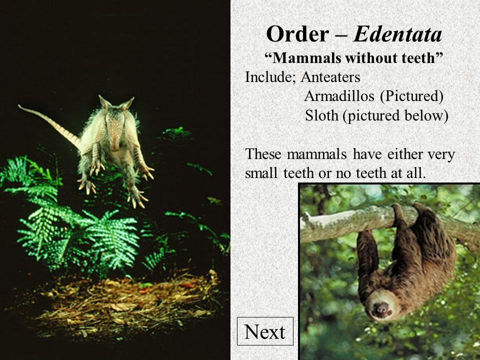 Elephant Skull Elephant Foot