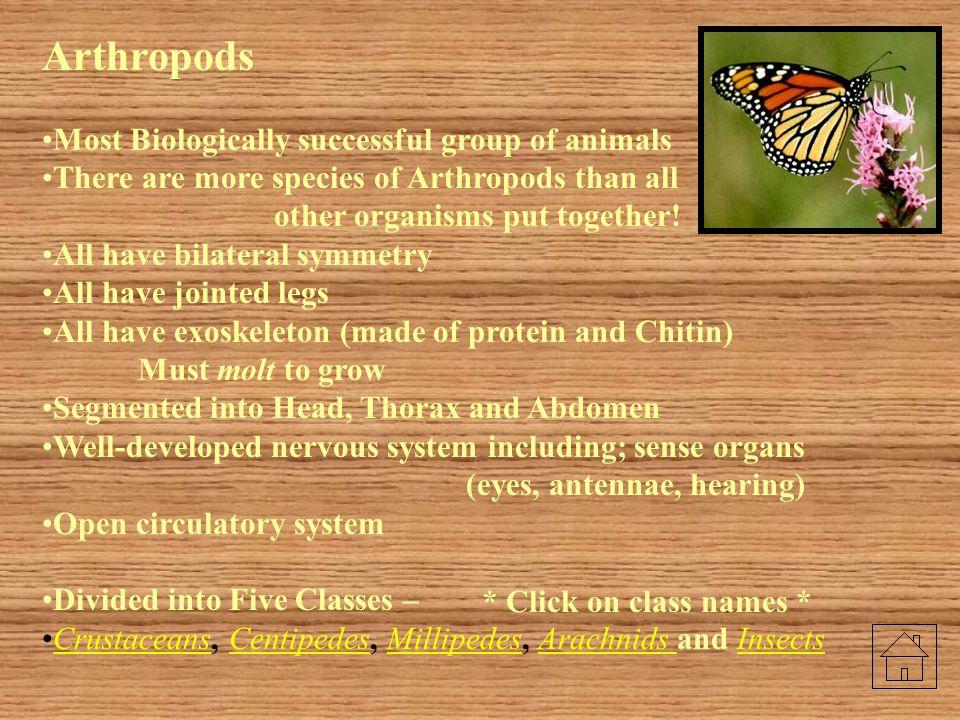 Earthworm Quiz Word Bank Crop………………...F Gizzard……………...G Pharynx……………..A Esophagus………….B Seminal Vesicles…..C Seminal Receptacles..D Intestine…….………H