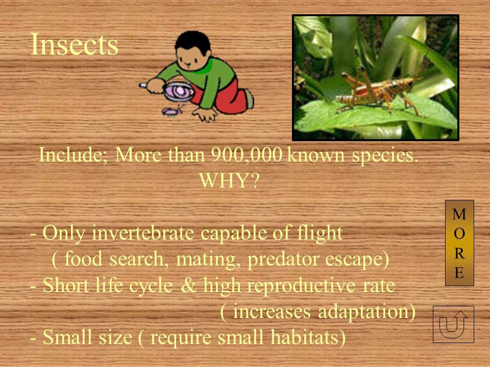 Six walking legs Breathe with book lungs located on the lower abdomen (leaf-like plates) Internal fertilization & external development Female lays egg