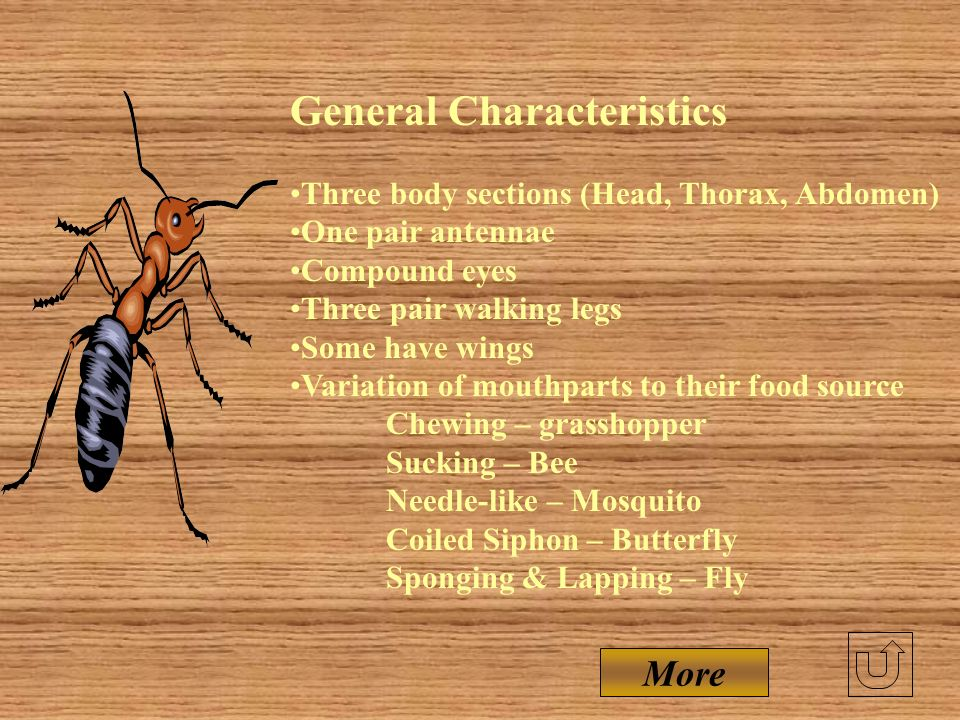 Insects Include; More than 900,000 known species. WHY? - Only invertebrate capable of flight ( food search, mating, predator escape) - Short life cycl
