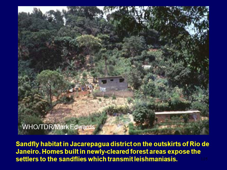 105 Sandfly habitat in Jacarepagua district on the outskirts of Rio de Janeiro. Homes built in newly-cleared forest areas expose the settlers to the s
