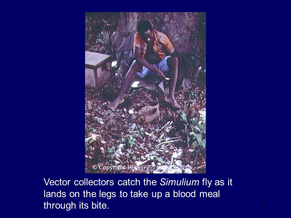 33 Vector collectors catch the Simulium fly as it lands on the legs to take up a blood meal through its bite. © Copyright 1997 OCP/APOC/WHO.OCPAPOCWHO