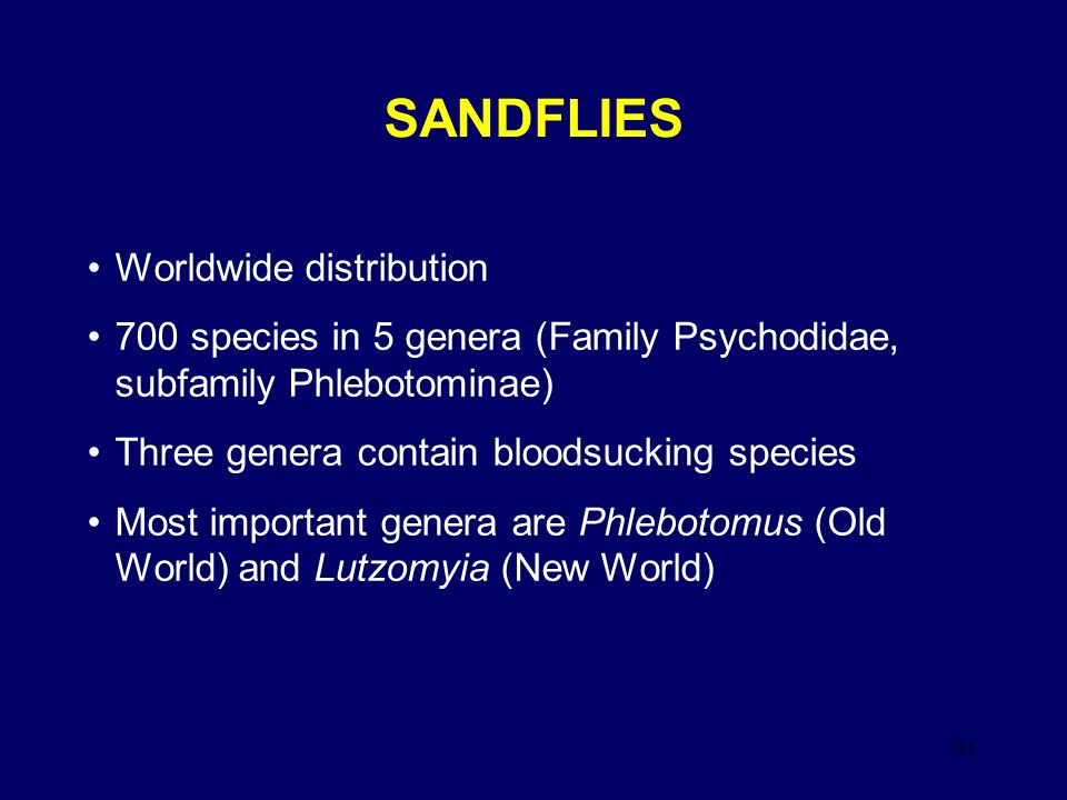 91 SANDFLIES Worldwide distribution 700 species in 5 genera (Family Psychodidae, subfamily Phlebotominae) Three genera contain bloodsucking species Mo