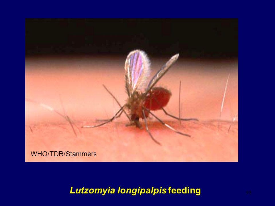 98 Lutzomyia longipalpis feeding WHO/TDR/Stammers