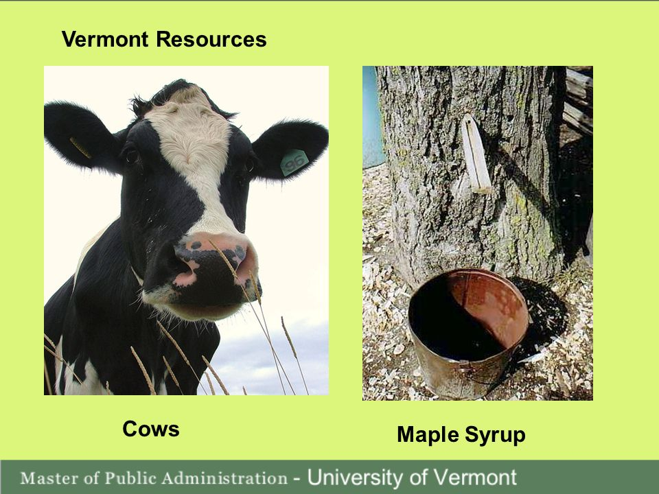Vermont Resources Cows Maple Syrup