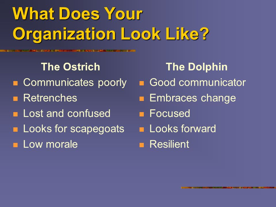 What Does Your Organization Look Like? The Ostrich Communicates poorly Retrenches Lost and confused Looks for scapegoats Low morale The Dolphin Good c