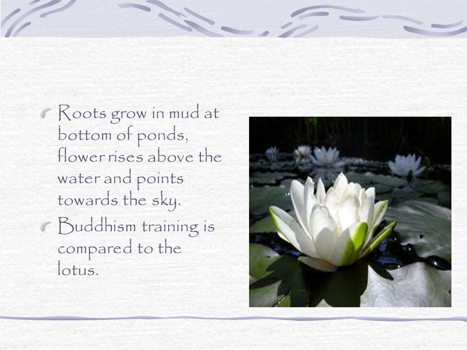 Buddhism… Symbolism of the lotus flower in Buddhism