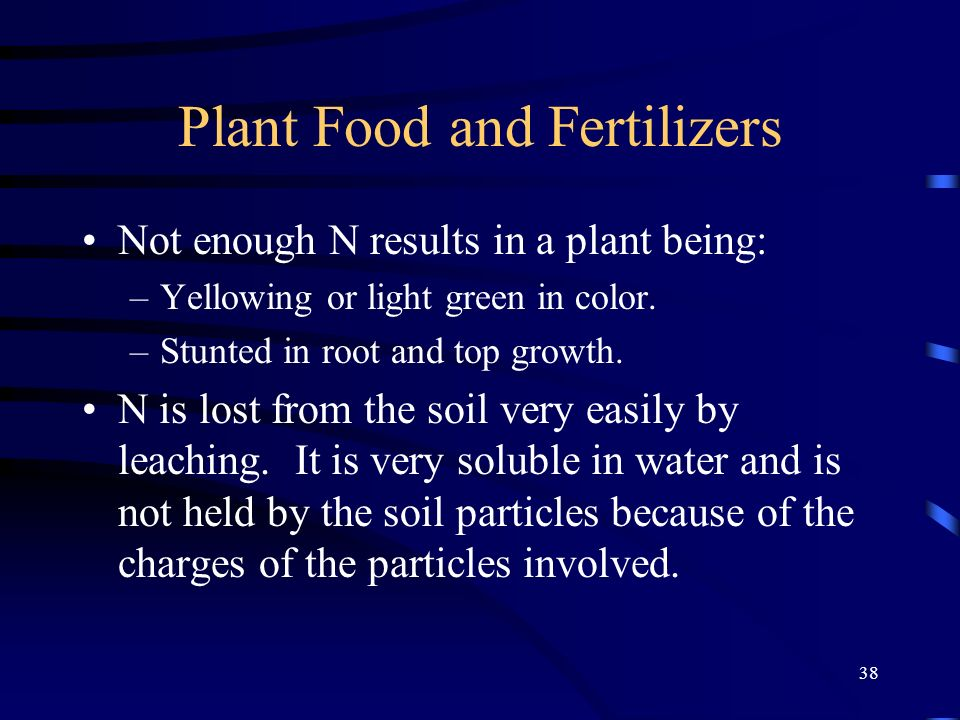 38 Plant Food and Fertilizers Not enough N results in a plant being: –Yellowing or light green in color. –Stunted in root and top growth. N is lost fr