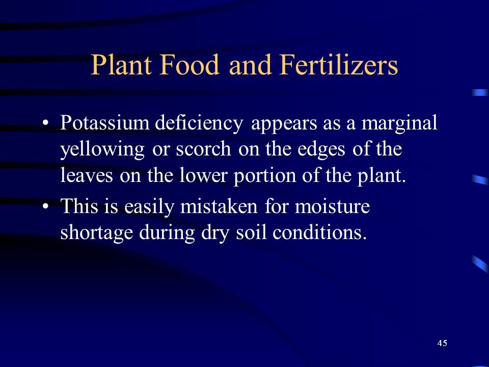 45 Plant Food and Fertilizers Potassium deficiency appears as a marginal yellowing or scorch on the edges of the leaves on the lower portion of the pl