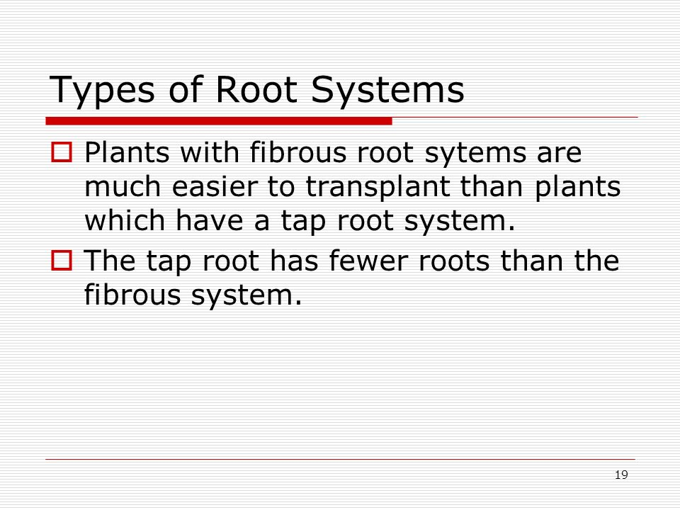 19 Types of Root Systems Plants with fibrous root sytems are much easier to transplant than plants which have a tap root system. The tap root has fewe