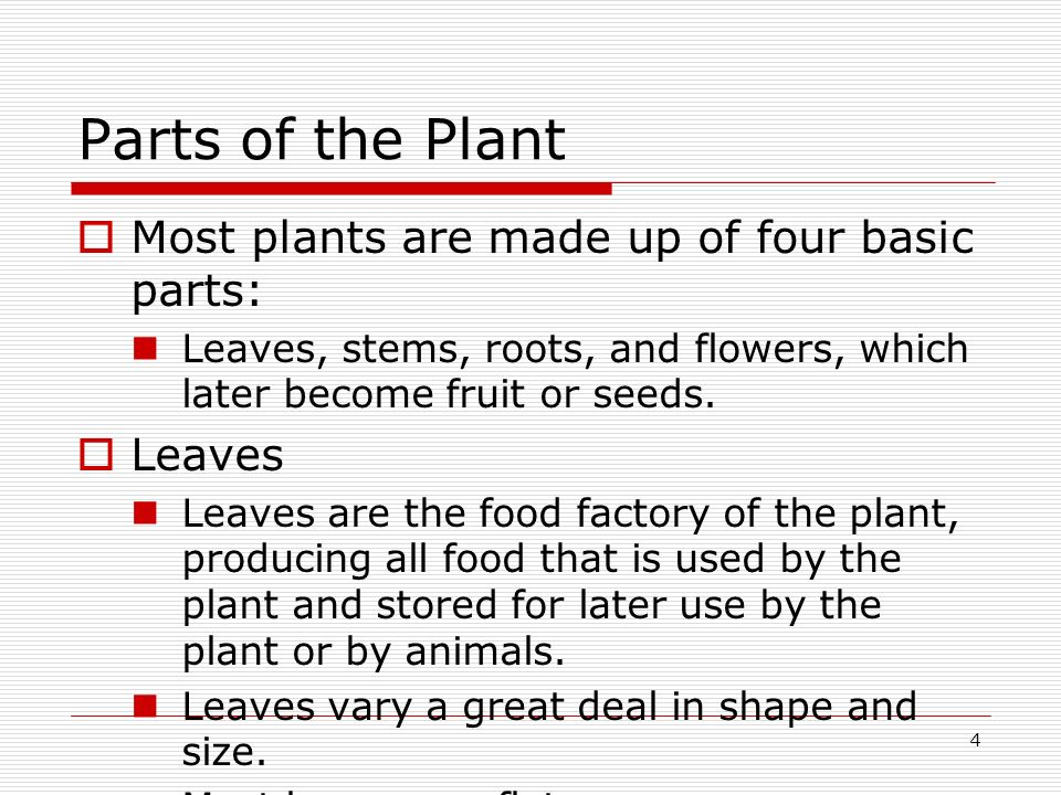4 Parts of the Plant Most plants are made up of four basic parts: Leaves, stems, roots, and flowers, which later become fruit or seeds. Leaves Leaves