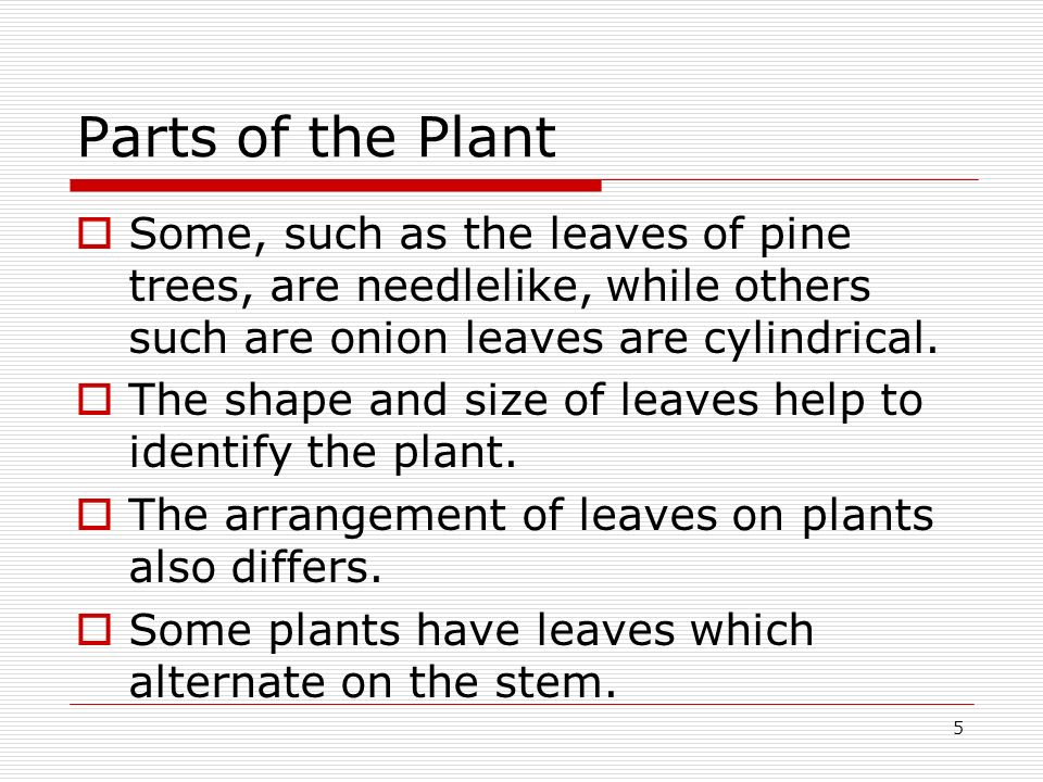 5 Parts of the Plant Some, such as the leaves of pine trees, are needlelike, while others such are onion leaves are cylindrical. The shape and size of