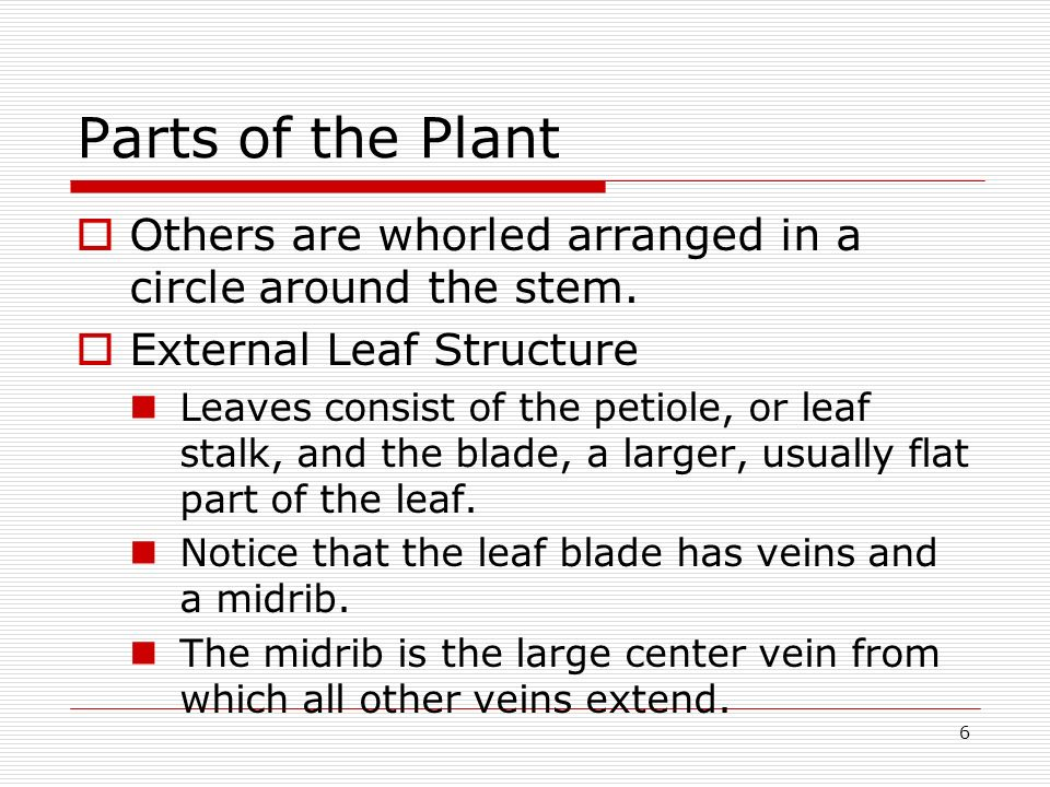 6 Parts of the Plant Others are whorled arranged in a circle around the stem. External Leaf Structure Leaves consist of the petiole, or leaf stalk, an