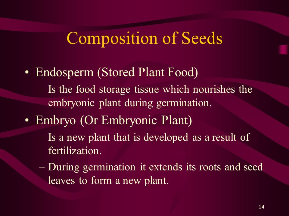 14 Composition of Seeds Endosperm (Stored Plant Food) –Is the food storage tissue which nourishes the embryonic plant during germination. Embryo (Or E