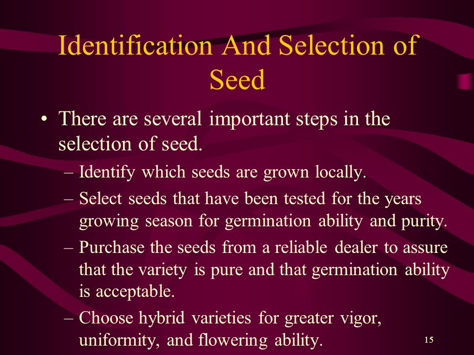 15 Identification And Selection of Seed There are several important steps in the selection of seed. –Identify which seeds are grown locally. –Select s
