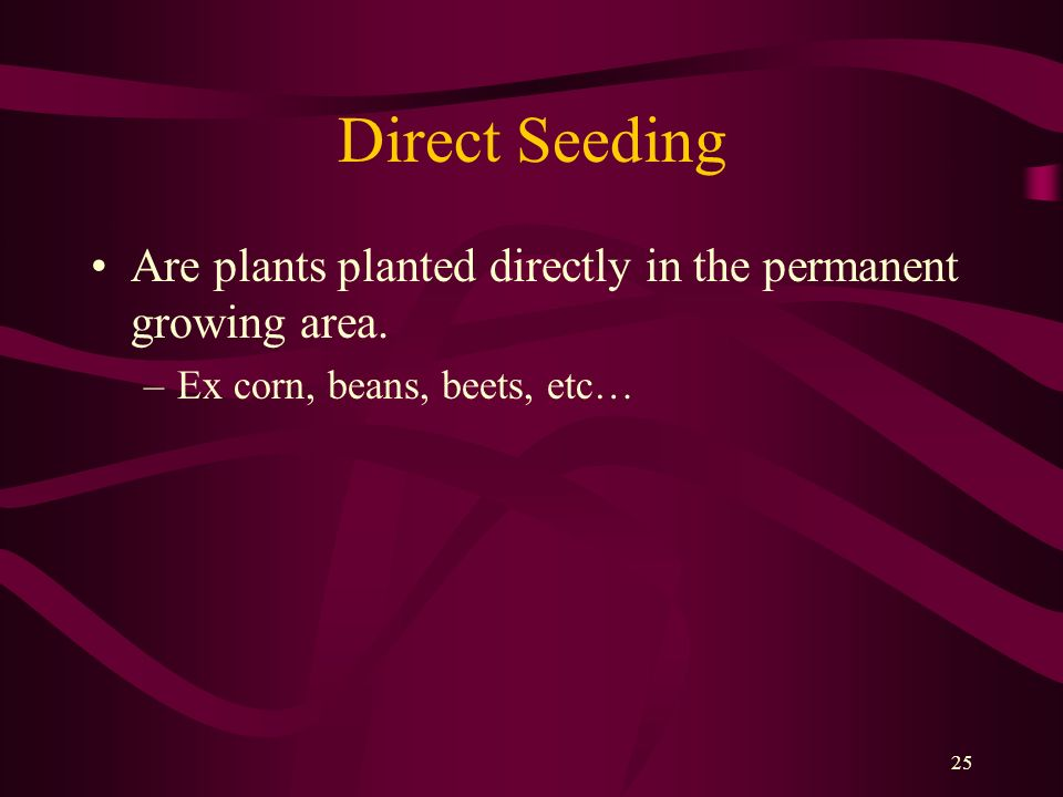 25 Direct Seeding Are plants planted directly in the permanent growing area. –Ex corn, beans, beets, etc…