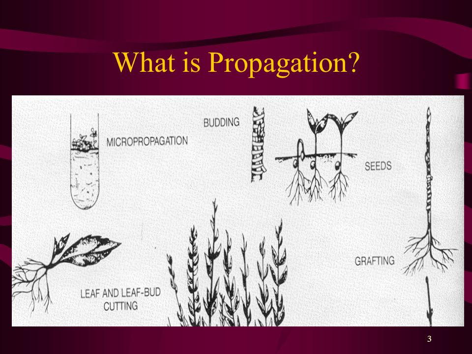 3 What is Propagation?