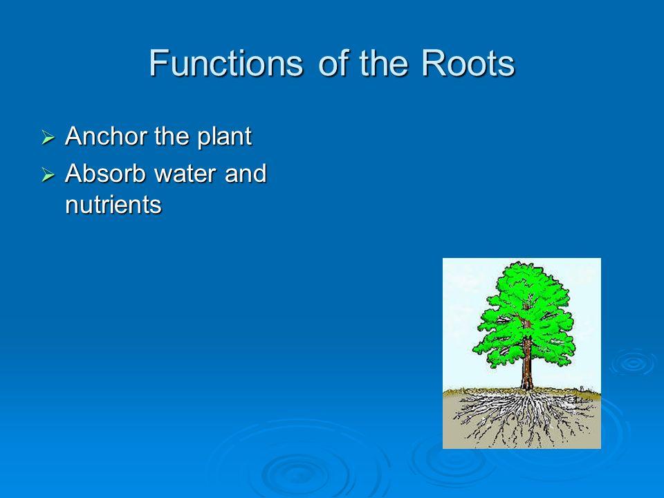 Plant Parts - Roots