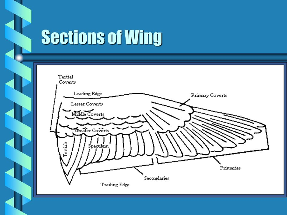 Sections of Wing