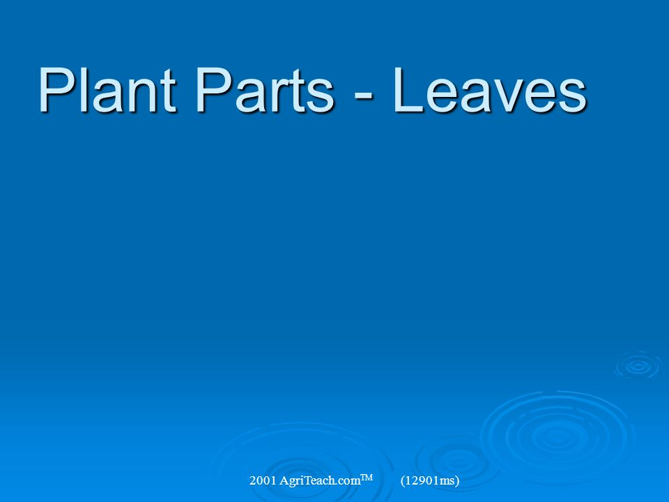 Plant Parts - Leaves 2001 AgriTeach.com TM (12901ms)
