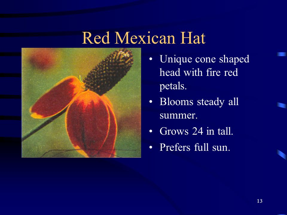 13 Red Mexican Hat Unique cone shaped head with fire red petals. Blooms steady all summer. Grows 24 in tall. Prefers full sun.