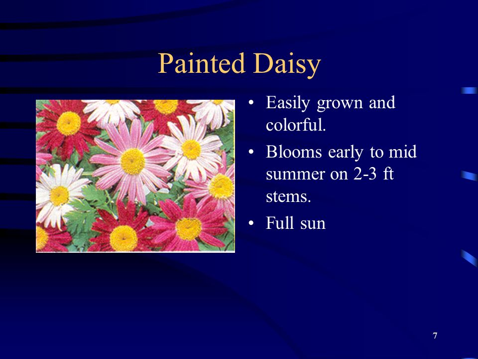7 Painted Daisy Easily grown and colorful. Blooms early to mid summer on 2-3 ft stems. Full sun