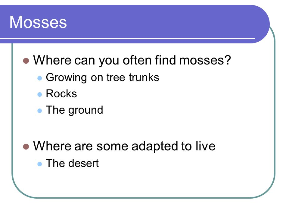 Where can you often find mosses? Growing on tree trunks Rocks The ground Where are some adapted to live The desert