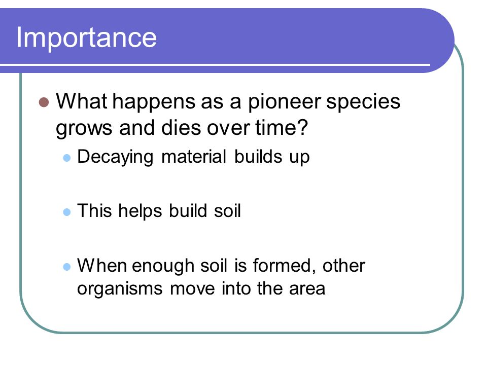 Importance What happens as a pioneer species grows and dies over time? Decaying material builds up This helps build soil When enough soil is formed, o