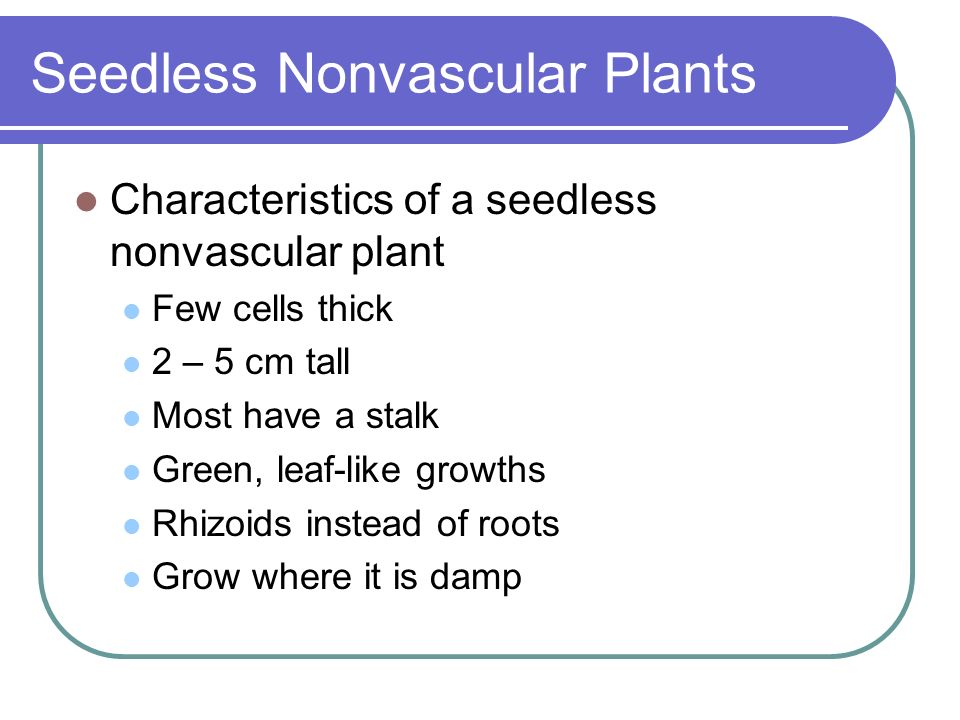Seedless Nonvascular Plants Characteristics of a seedless nonvascular plant Few cells thick 2 – 5 cm tall Most have a stalk Green, leaf-like growths R