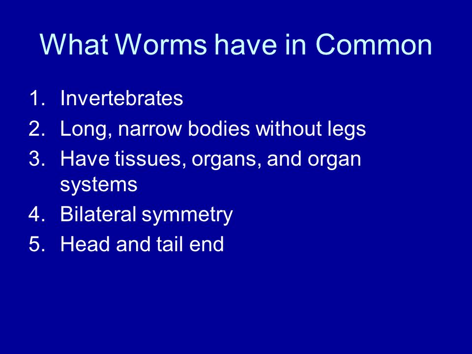 What Worms have in Common 1.Invertebrates 2.Long, narrow bodies without legs 3.Have tissues, organs, and organ systems 4.Bilateral symmetry 5.Head and