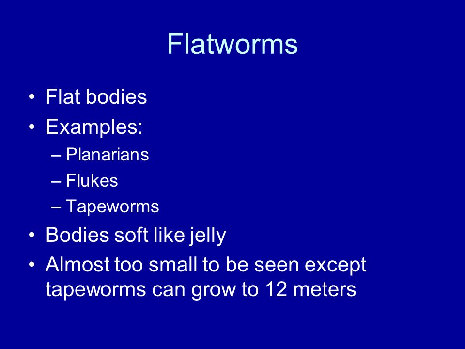 Flatworms Flat bodies Examples: –Planarians –Flukes –Tapeworms Bodies soft like jelly Almost too small to be seen except tapeworms can grow to 12 mete