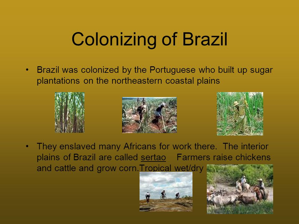 Colonizing of Brazil Brazil was colonized by the Portuguese who built up sugar plantations on the northeastern coastal plains They enslaved many Afric