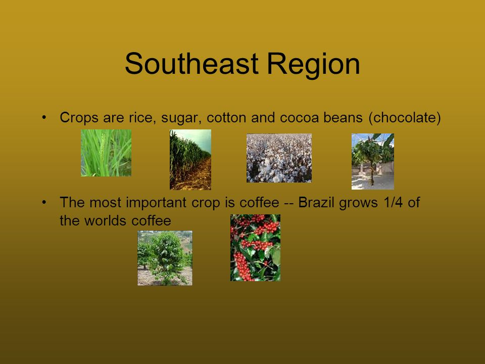 Southeast Region Crops are rice, sugar, cotton and cocoa beans (chocolate) The most important crop is coffee -- Brazil grows 1/4 of the worlds coffee