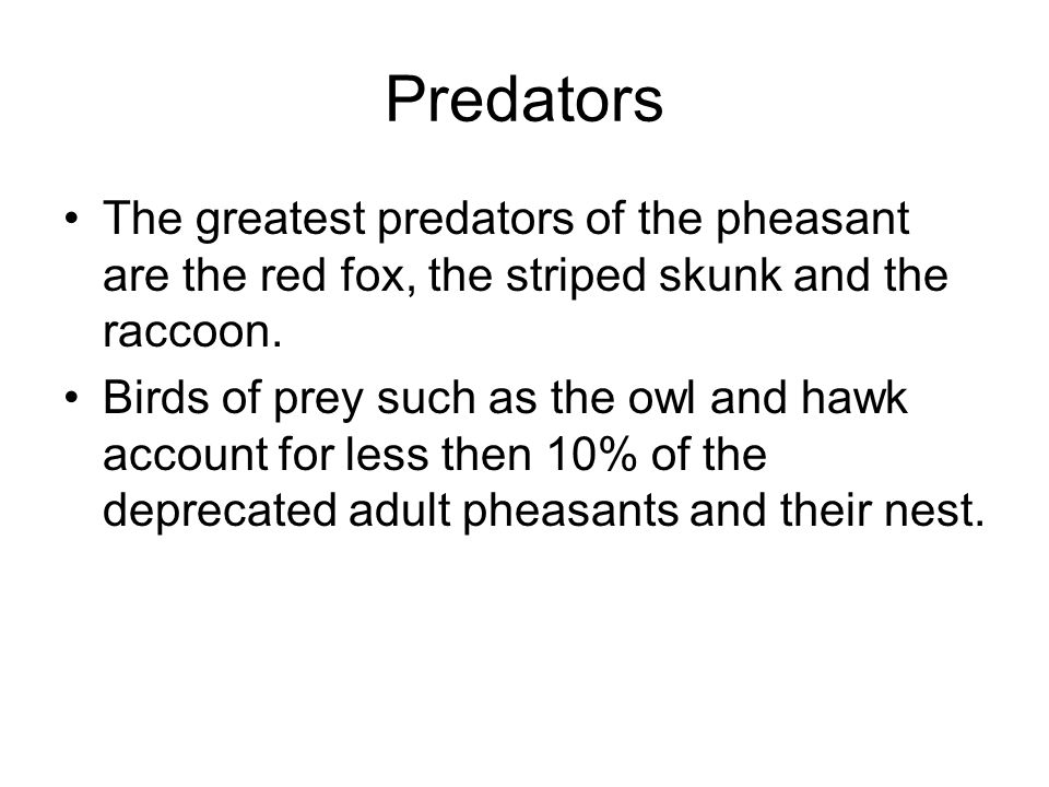 Predators The greatest predators of the pheasant are the red fox, the striped skunk and the raccoon. Birds of prey such as the owl and hawk account fo
