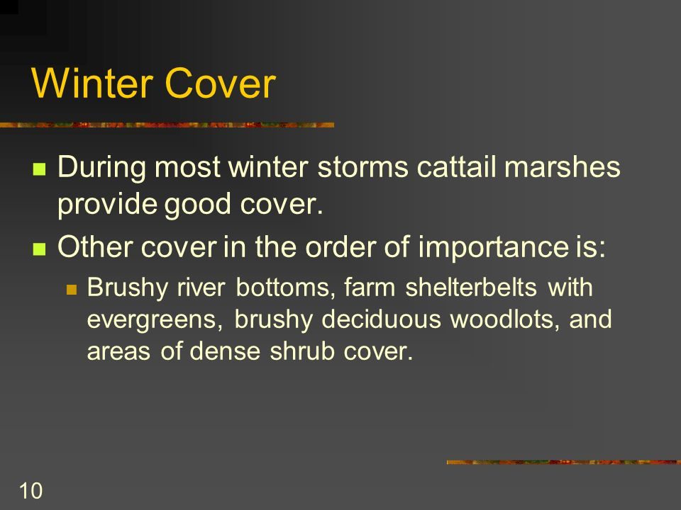 10 Winter Cover During most winter storms cattail marshes provide good cover.