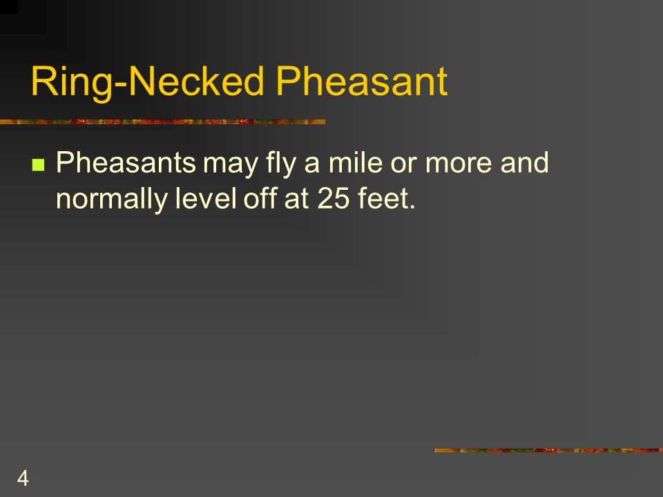 4 Ring-Necked Pheasant Pheasants may fly a mile or more and normally level off at 25 feet.