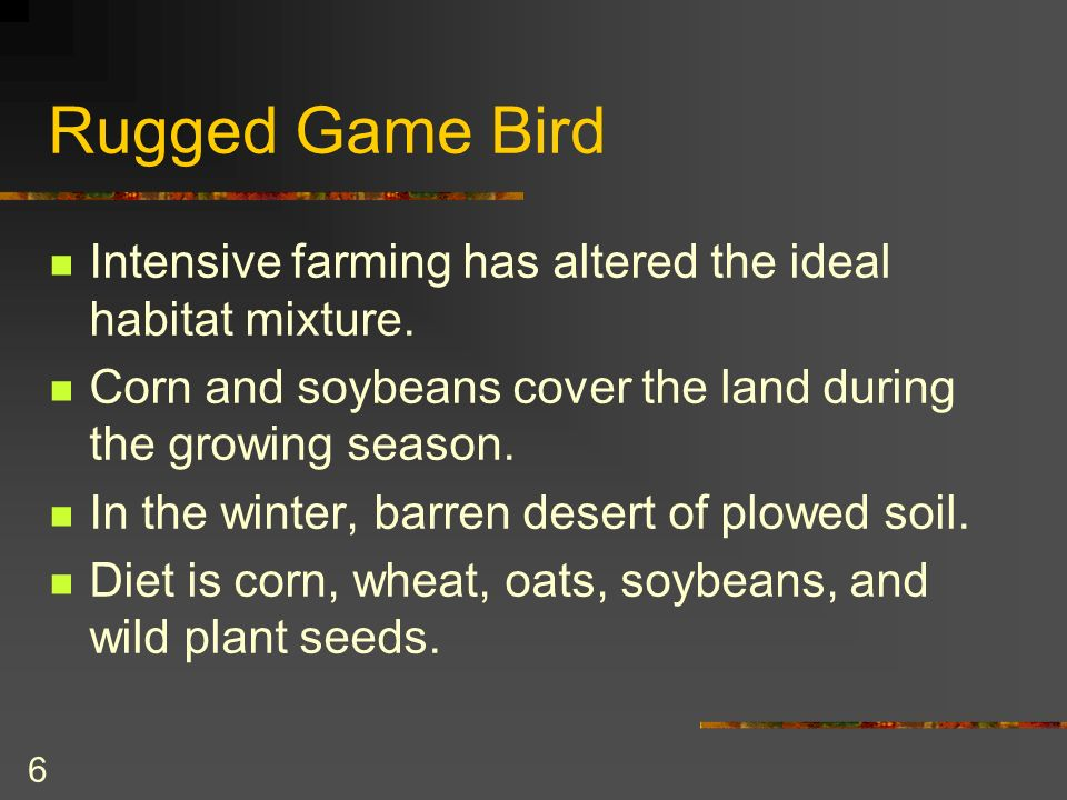 6 Rugged Game Bird Intensive farming has altered the ideal habitat mixture.
