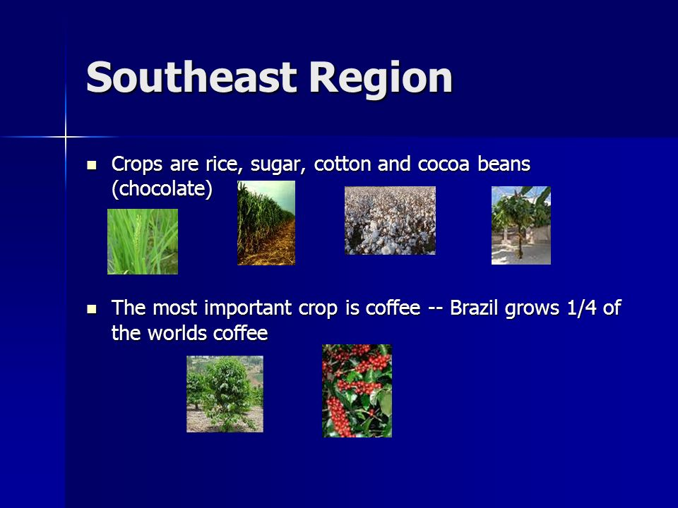 Southeast Region Crops are rice, sugar, cotton and cocoa beans (chocolate) Crops are rice, sugar, cotton and cocoa beans (chocolate) The most importan