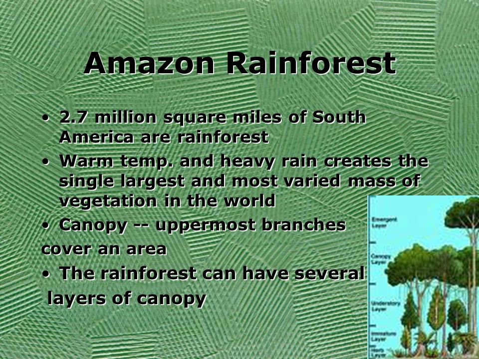 Amazon Rainforest 2.7 million square miles of South America are rainforest Warm temp. and heavy rain creates the single largest and most varied mass o