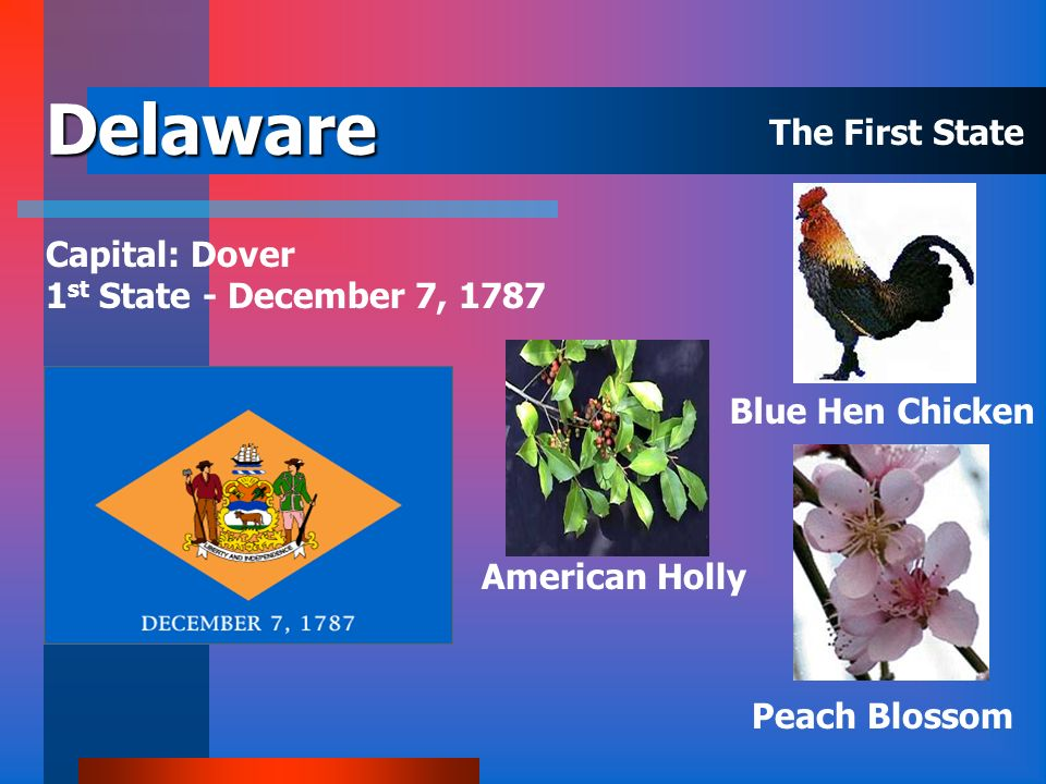 Connecticut Capital: Hartford 5 th State - January 9, 1788 Mountain Laurel White Oak Robin The Constitution State