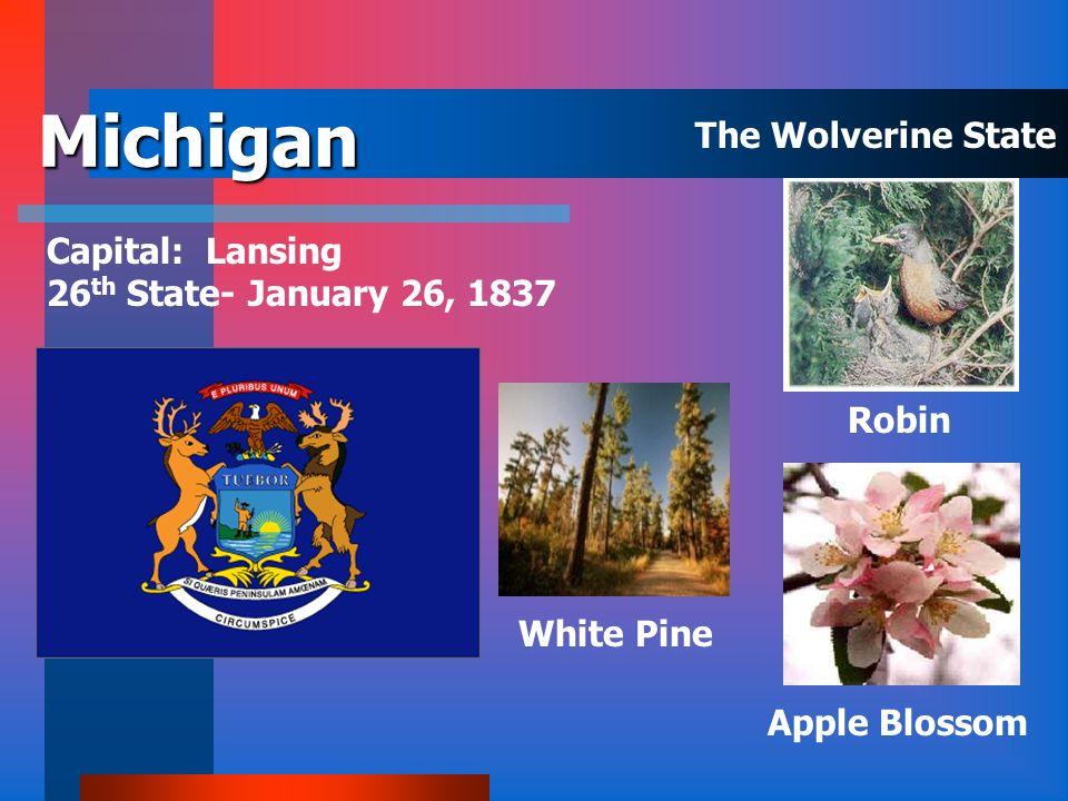 Massachusetts Capital: Boston 6 th State – February 6, 1788 Chickadee American ElmMayflower The Bay State